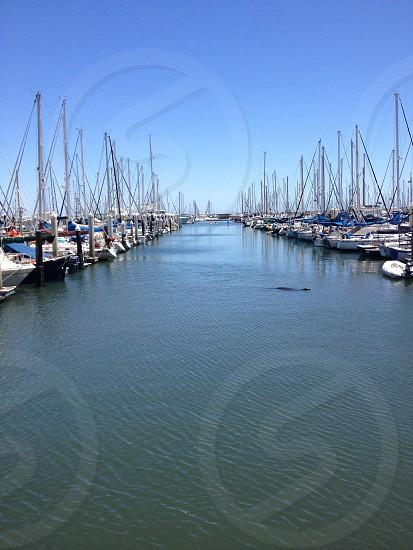 yacht boats on dock photo