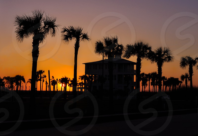 sunset over palm trees and building photo