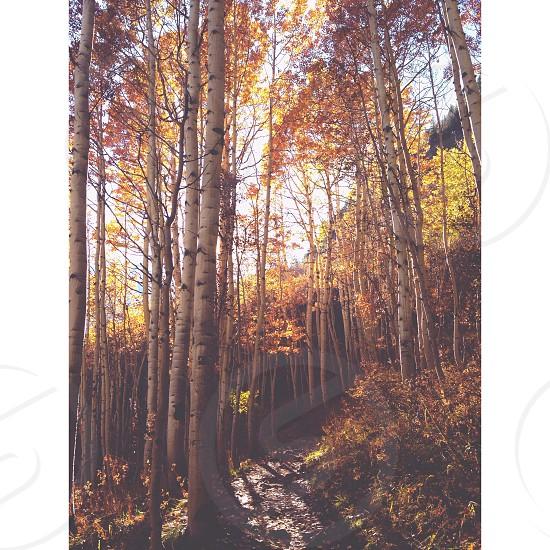 Aspen Colorado. Aptly named. photo