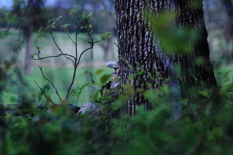 Turkey hunter hidden with camoflage photo