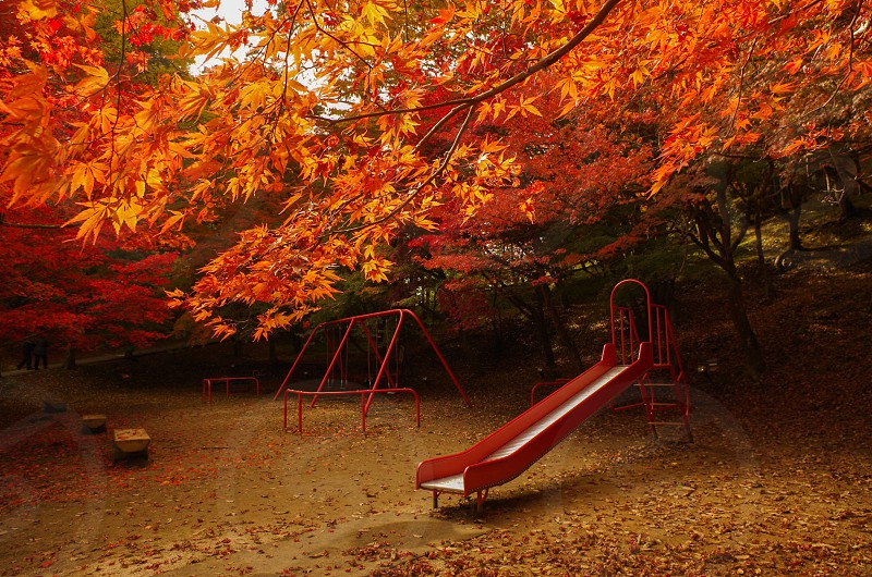 portrait photography of red playground slide surrounded by brown maple trees during daytime photo
