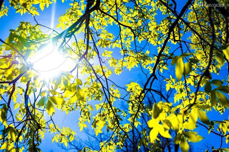 Sunshine photo
