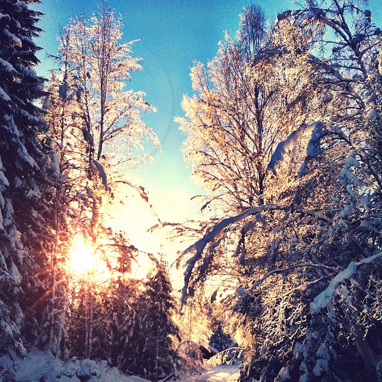 trees covered with white snow during sunrise photo