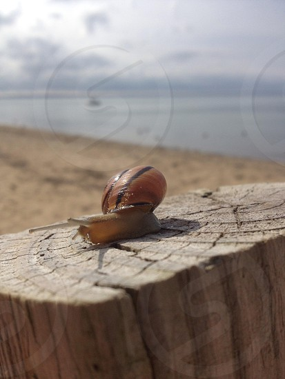 Snail beach sunny day photo