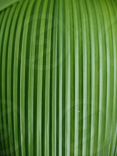 Green leaf texture close up tropical background  photo