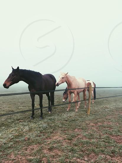BOA horses photo