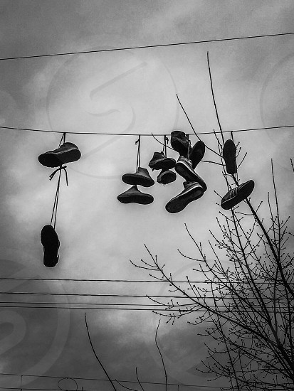 Outdoor day vertical black and white b+w shoes sneakers trainers laces trees branches twigs wires telegraph Sky Tallinn Europe Estonia urban European travel tourist tourism photo