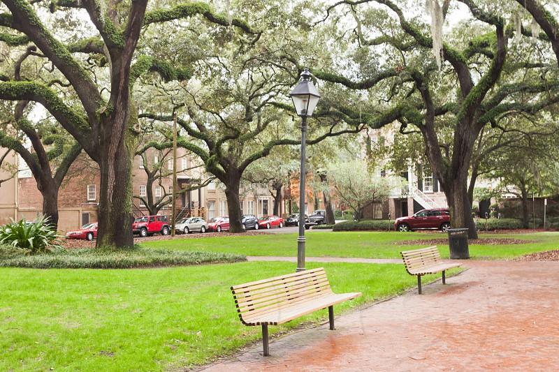 Green lawn and benches under oak trees on Chatham Square in Historic District of downtown city of Savannah Georgia GA USA photo