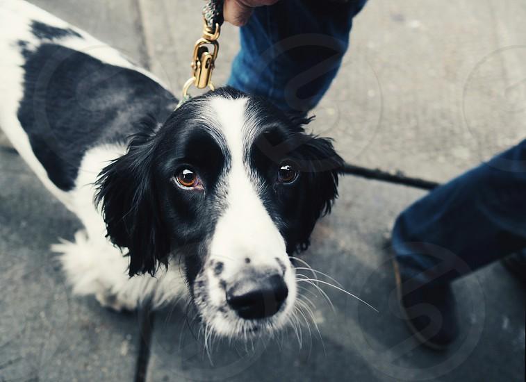 friendly dog on the street. photo