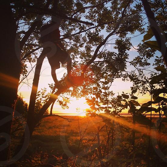 person climbing tree watching sunset photo
