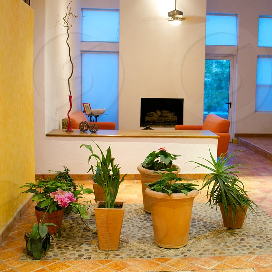 green indoor potted plants photo