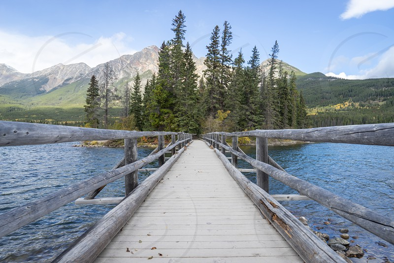grey wooden footbridge heading to island with tall trees photo