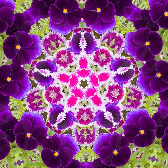 Kaleidoscopic altered image of garden flowers pansies dianthus resembling a mandala photo