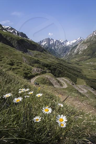 Alpine flowers. photo