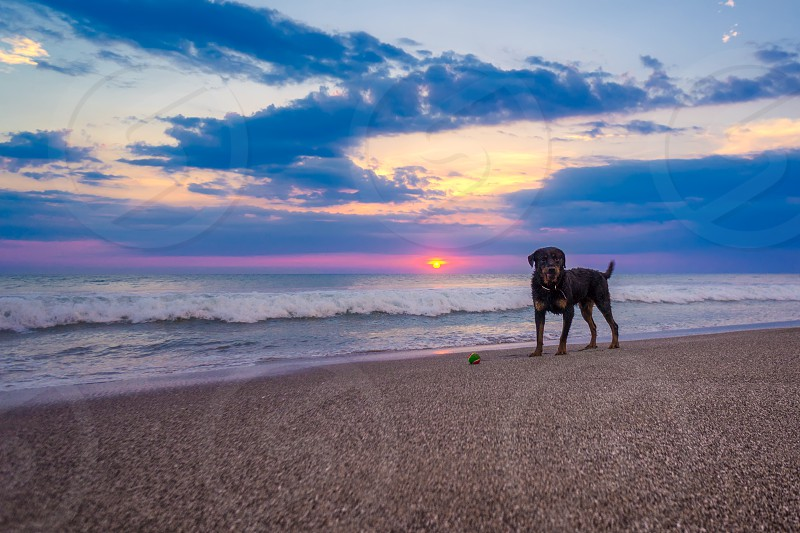 Bali Indonesia beach sunset dog ball wave paradise photo