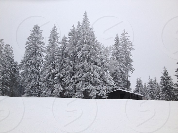 green tree and house cover by snow view photo