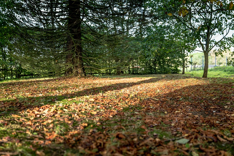 Autumn has arrived - a carpet of leaves photo
