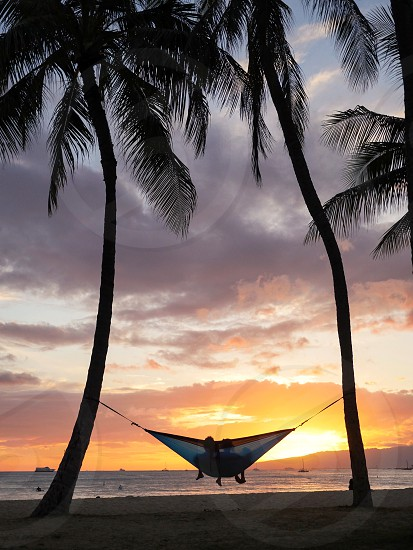 Honeymoon couple on a hammock relaxing at the beach between two palm trees enjoying the sunset  photo