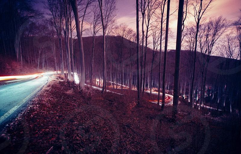 road night dark cars headlights forest nature photo