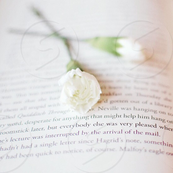 Book and flower photo