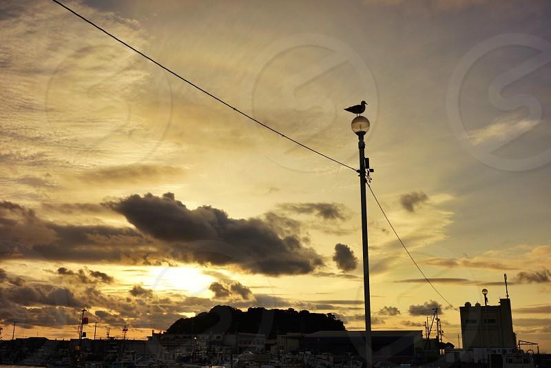 Bird & Sunset photo