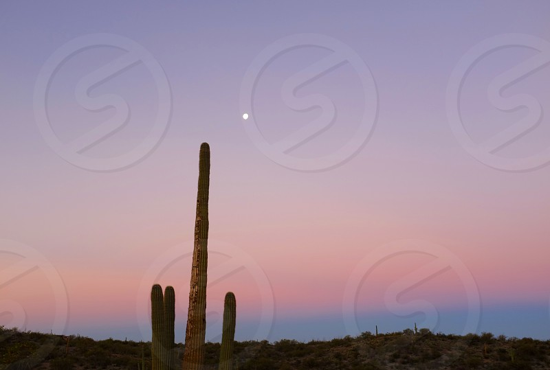 Saguaro National Park Tucson Arizona photo