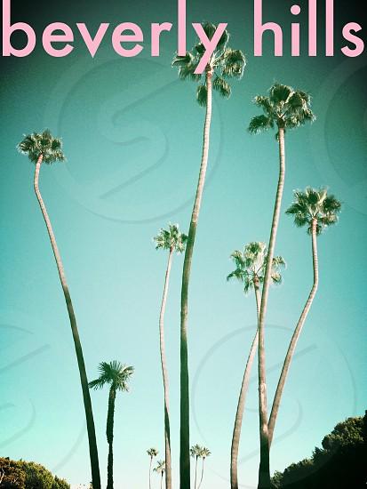 Crazy palms photo