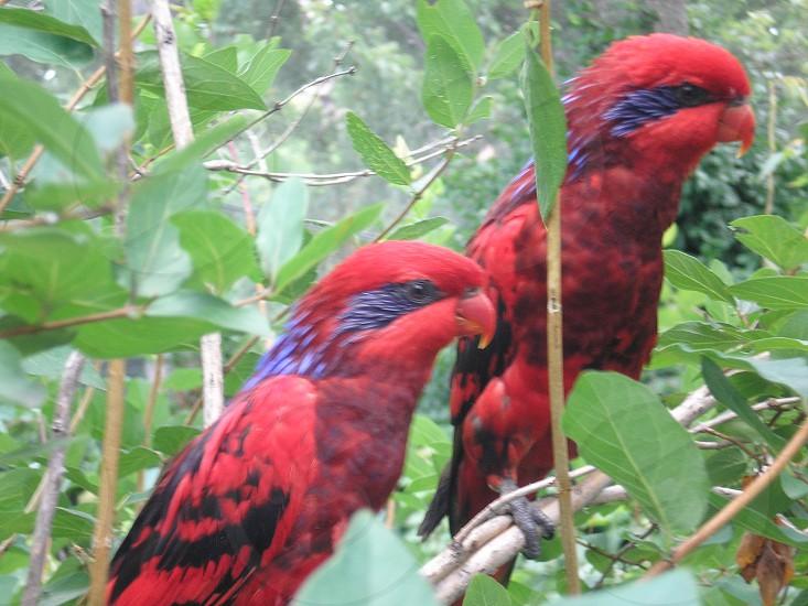 NY Zoo photo