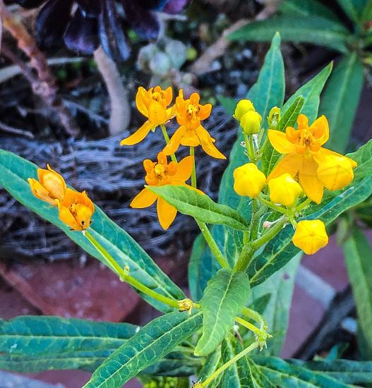 Spring yellow orange green flowers  photo