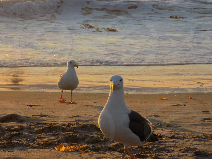 beachnaturescenicseagullsbirdssandocean photo
