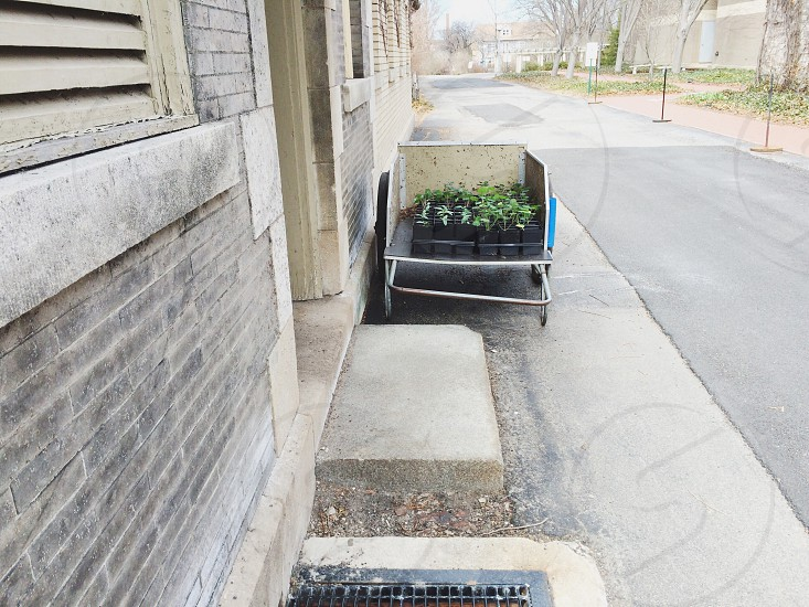 Wagon filled with plants ready to be planted at the George Eastman House.  photo