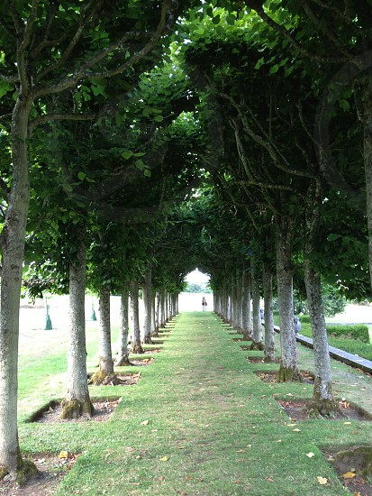 Tree lined garden path photo