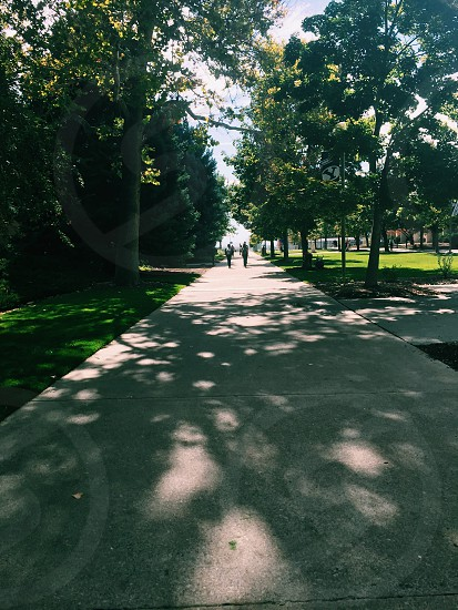 Campus college paved trees grass late summer calm shadows people students calm peace serenity green photo