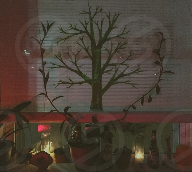 white window blinds with green cutout tree bottom with different kinds of liquor in dim light room photo