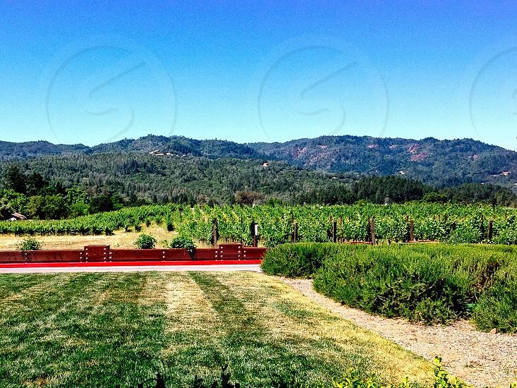 Vineyard landscape nature photo