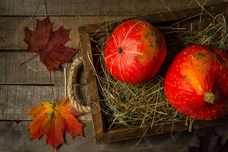 Top view of two small autumn pumpkins laying in straw an old wooden tray maple leaves on wooden rustic background. Concept shot horizontal orientation. photo