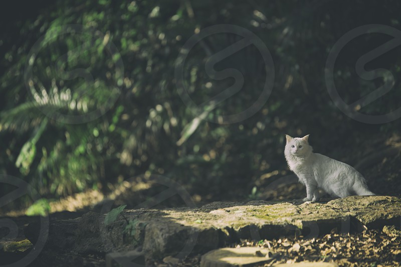 white short fur cat standing on grey rock formation near plants during daytime photo