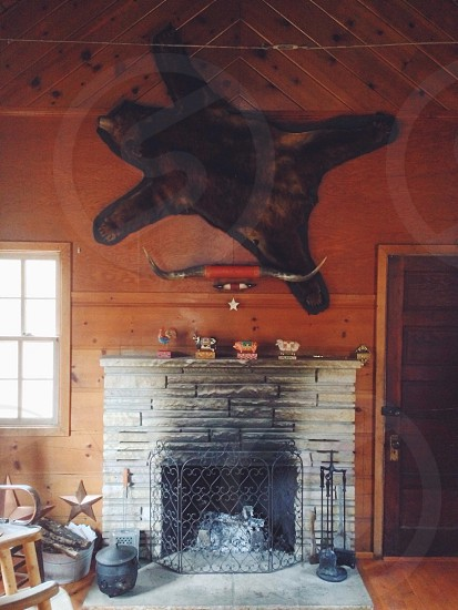 bear skin nailed to wooden wall above fireplace photo