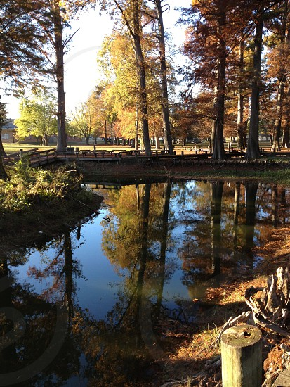Autumn walk at Reelfoot Lake photo