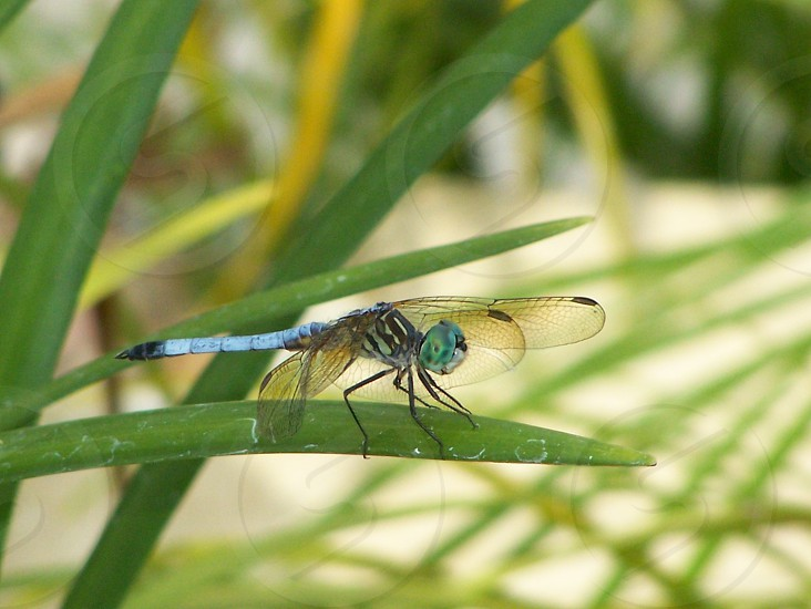 shallow focus photography of blue-green dragonfly on green leaf photo