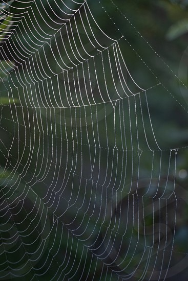 This huge spider web was one of several in a  wet area of the Mizzy Trail in Algonquin park. Morning sunlight reflects off of the dew drops on the intricate web. photo