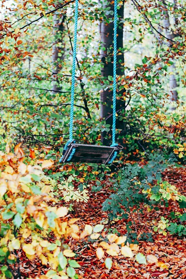 Fall season autumn forest tranquility  tranquil swing colorful photo