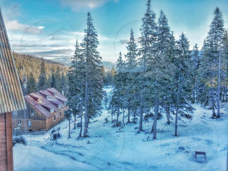 Dragobrat Ukraine snow treehouse trees mountain  photo
