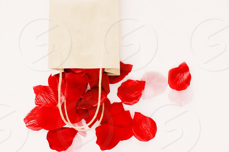 red rose petals photo