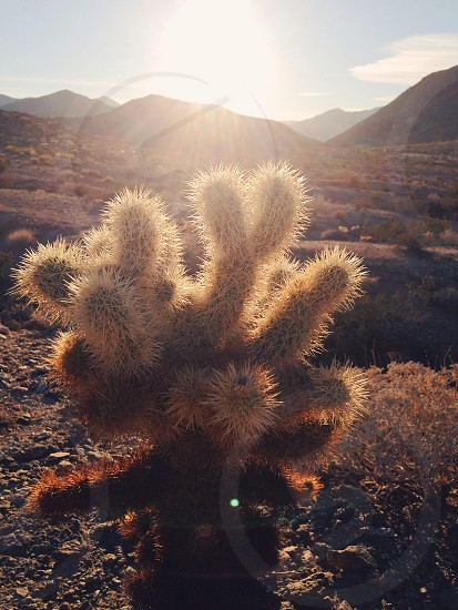 browncactus photo