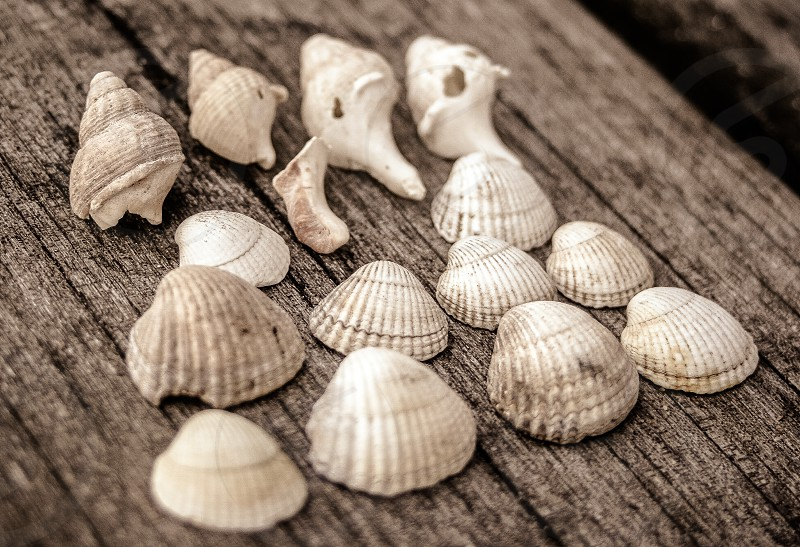 Found the sea shells and had to use them ordered them to texture and size. And how they went together. photo