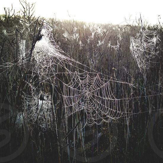 white spider webs photo