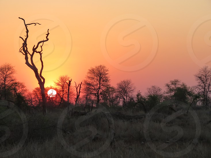 African Sunset 3 photo