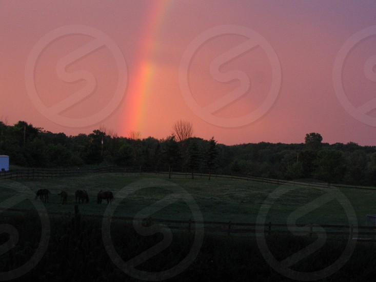 Rainbow over pasture and horses photo