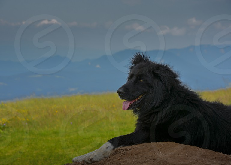 black long coat dog on brown soil surrounded by green grass field during daytime photo